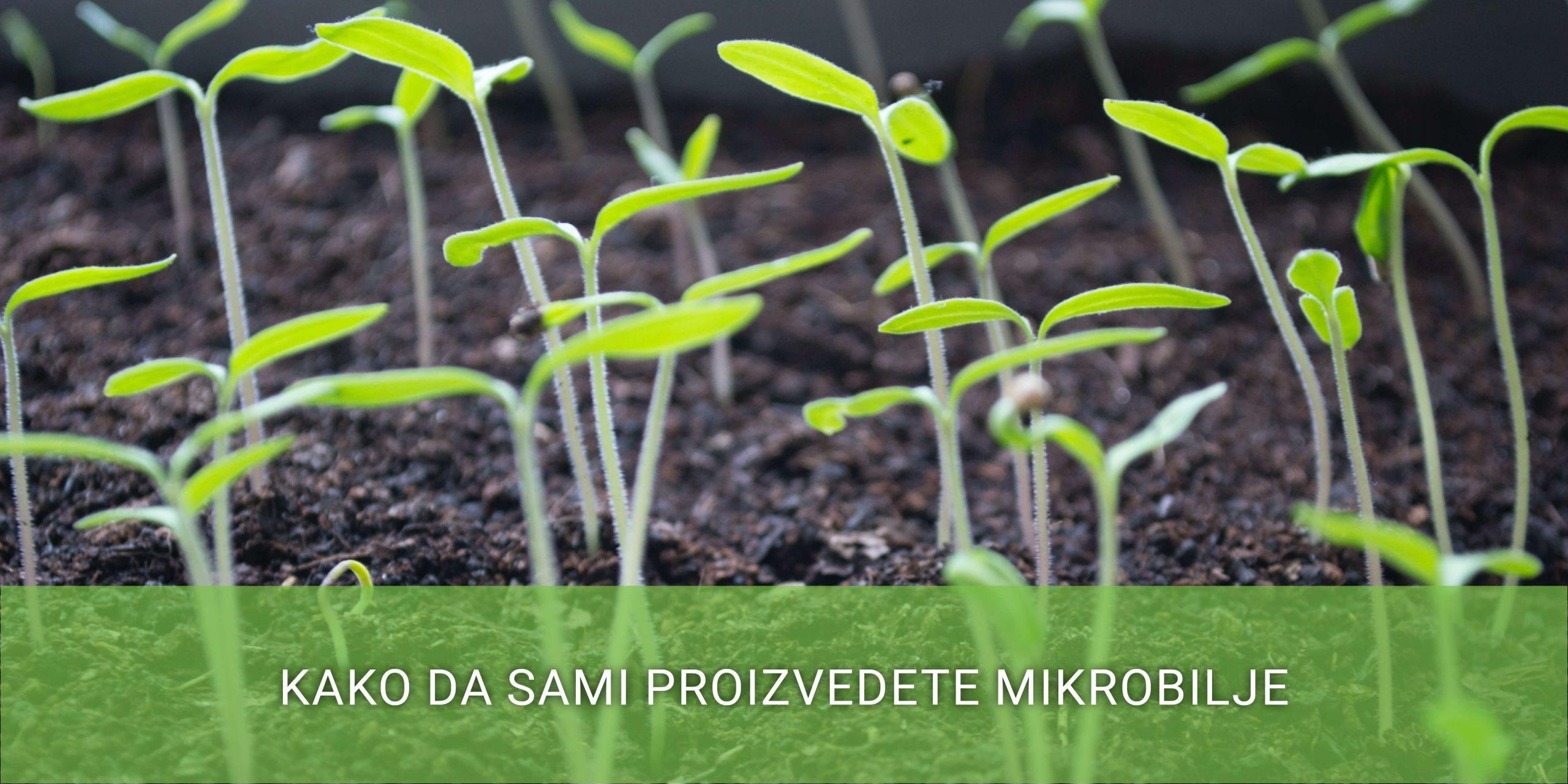 proizvodnja-mikrobilja