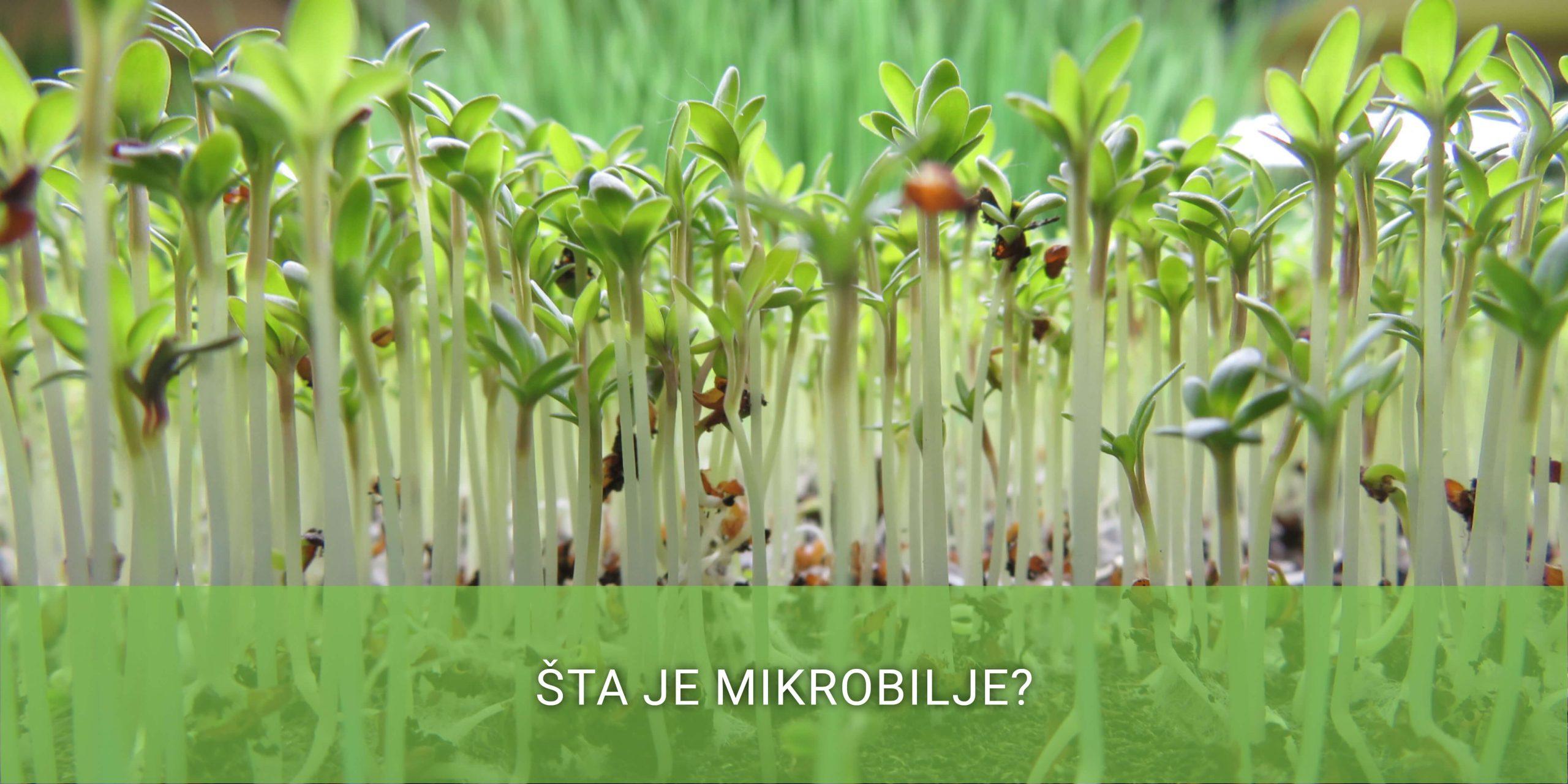 sta-je-mikrobilje
